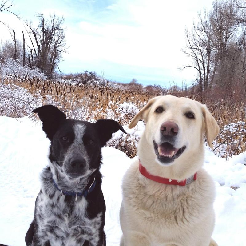 #WPRPetWednesday Roxy and Blue love Wyoming Sounds !