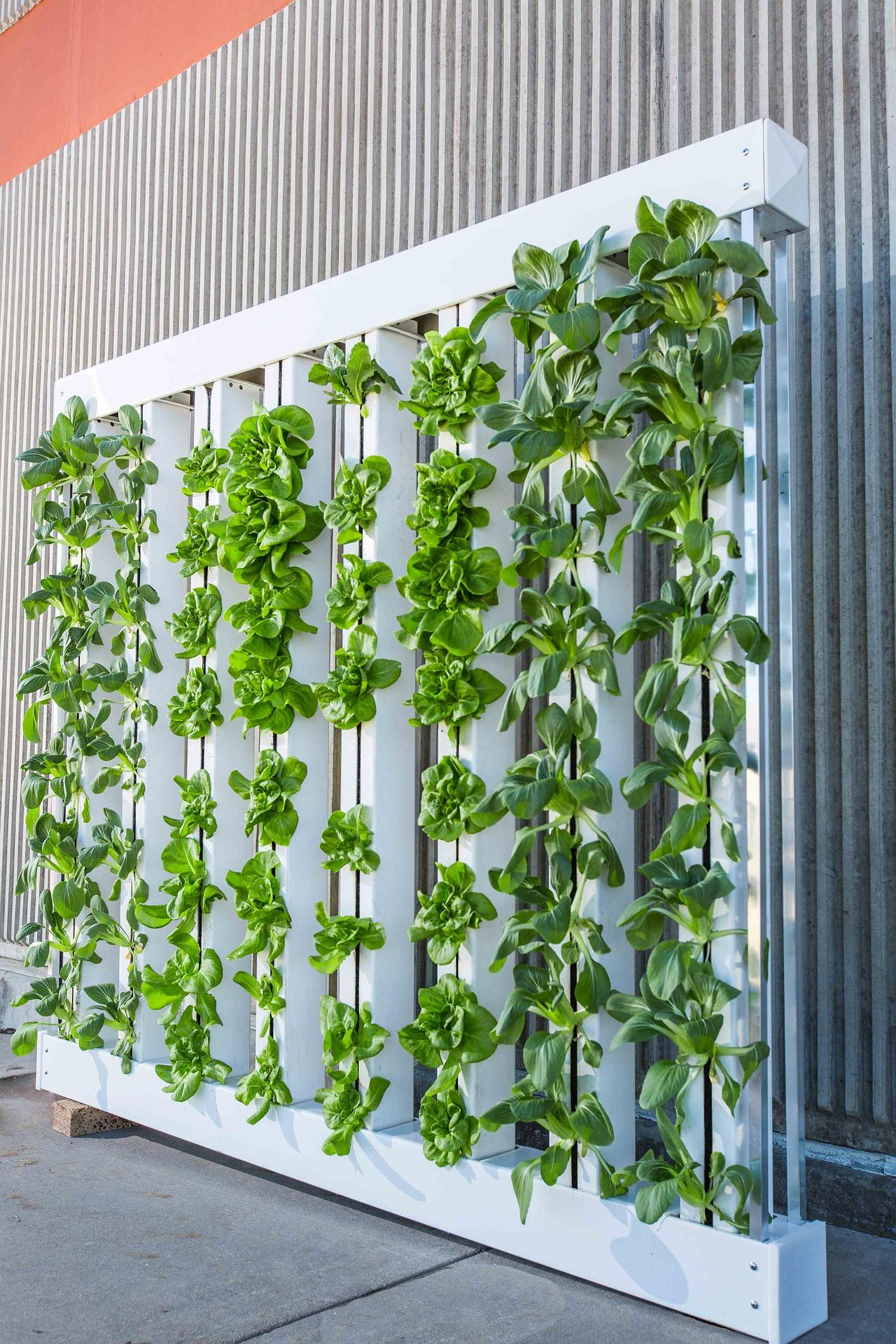 informal green wall indoors. Credit Bright Agrotech; Https://pixabay.com/en/vertical-farm-green-wall -bok-choy-916337/ Informal Green Wall Indoors L