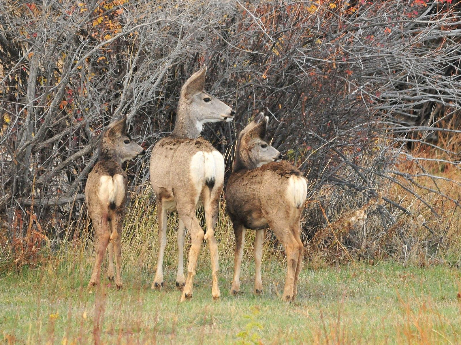 Game and fish announces strategies to deal with chronic for Wyoming game and fish license