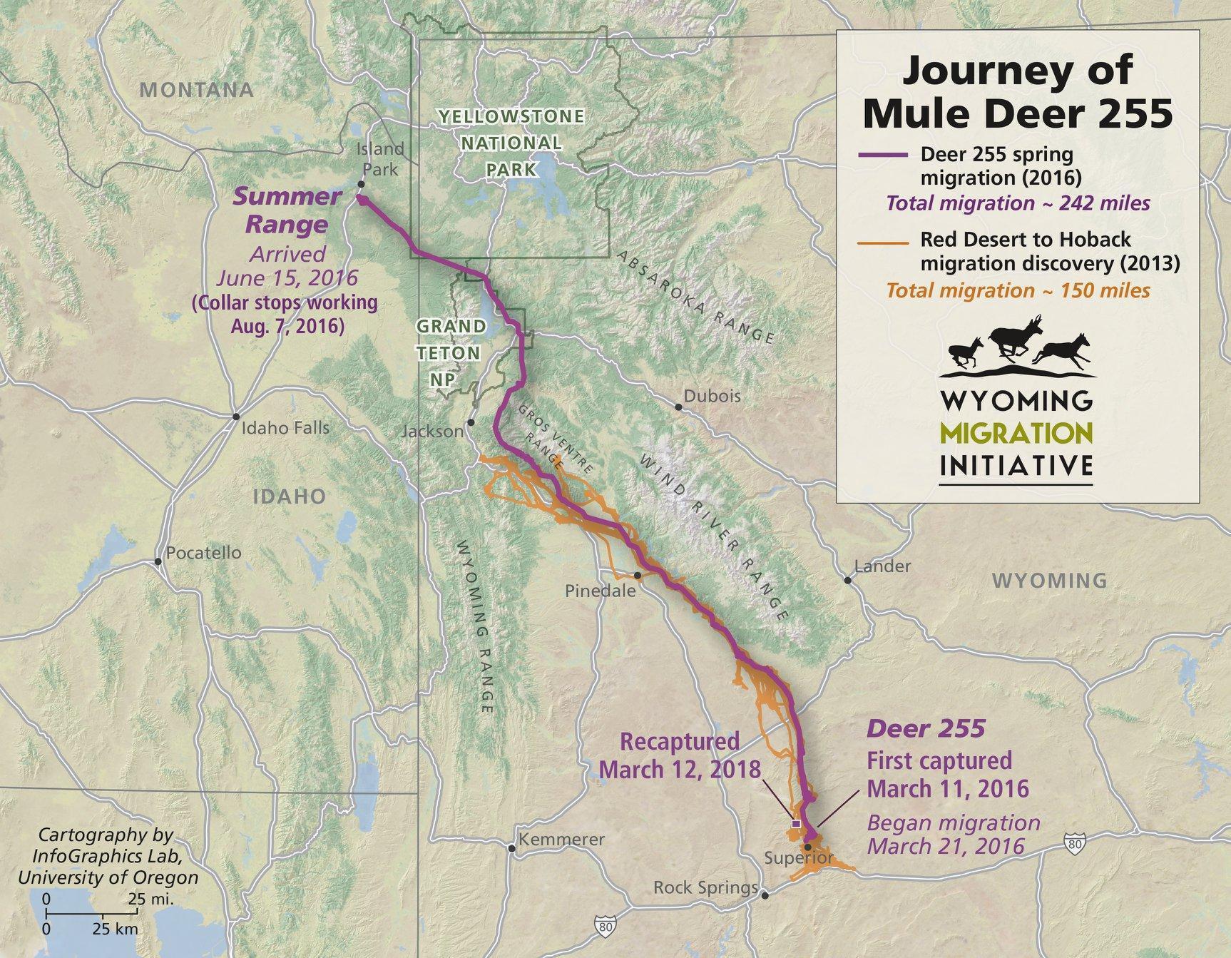 Wildlife Biologist Tells Story Of Mule Deer Doe S Record Breaking