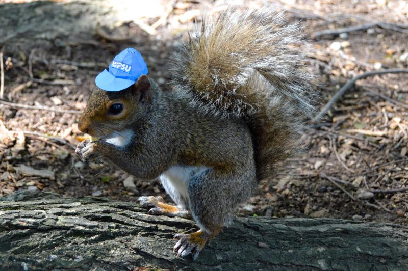 Sneezy the Squirrel wearing a WPSU ball cap.