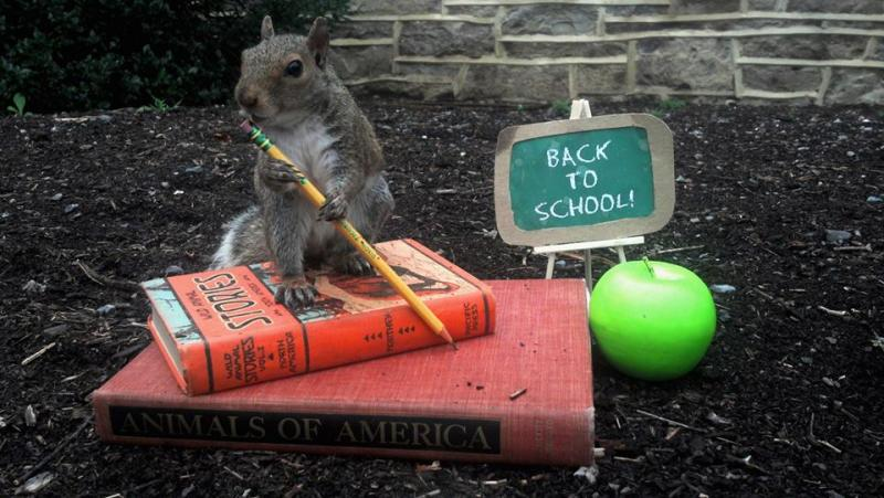 Sneezy the Squirrel on pile of books