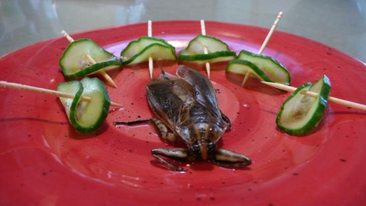 Edible waterbug on plate