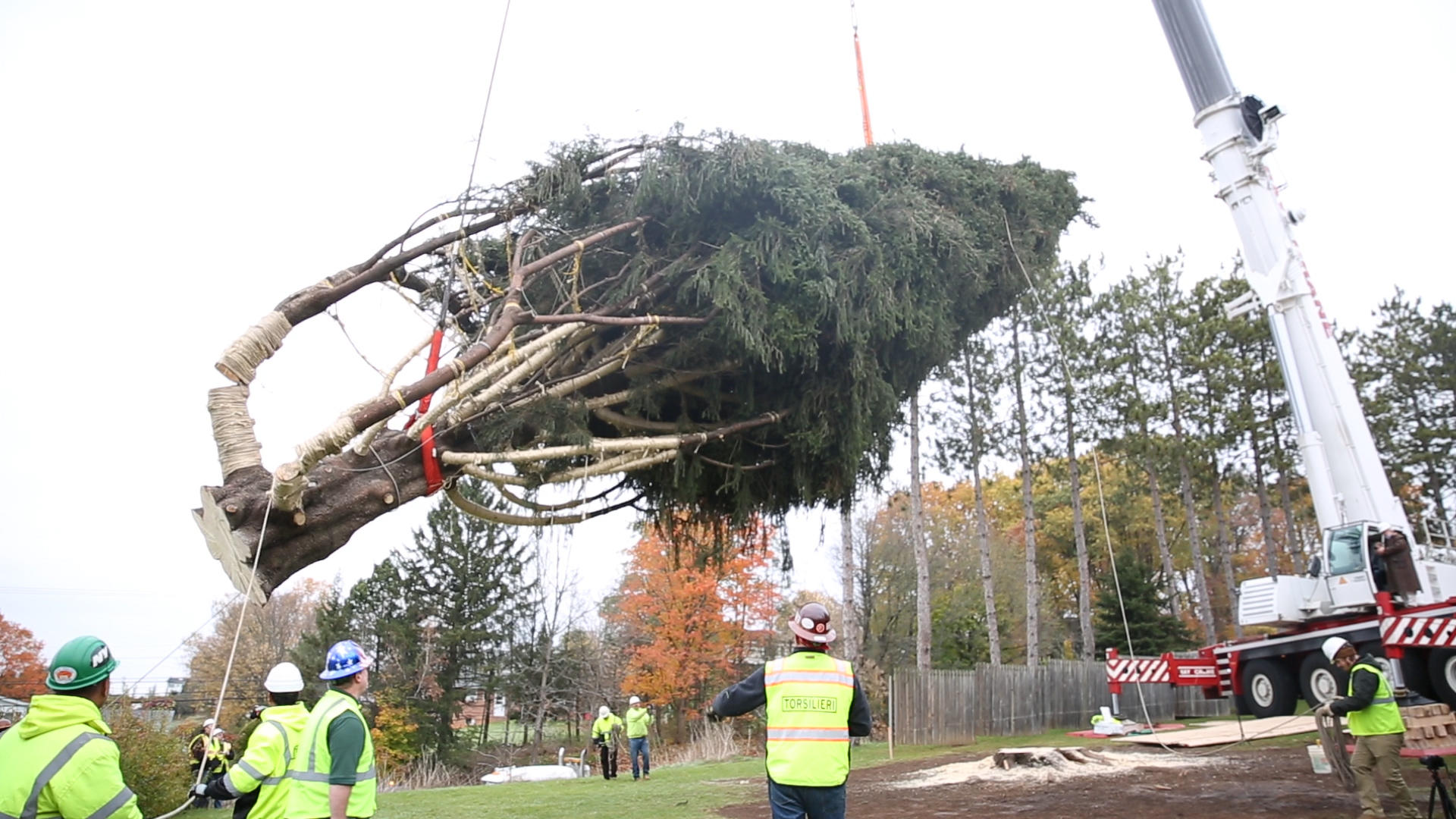 this years rockefeller christmas tree the 75 foot tall norway spruce is making its way to rockefeller center