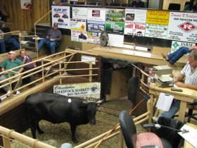 Sale day at the livestock market