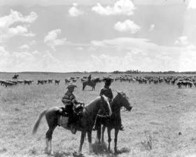 Seminole cowboys working at Brighton