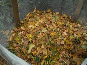 Leaves in a homemade compost container. 