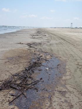 Oil washed up on the shore of Grand Isle after the BP Spill in April 2010, near the location where Greg Olson collected contaminated pogy samples.
