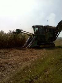 Danny Landrieu cuts cane with a $350,000 sugar combine. (Tegan Wendland/WRKF)