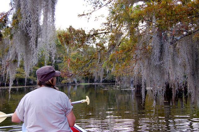 Rowing between some Spanish moss in a Louisiana bayou.