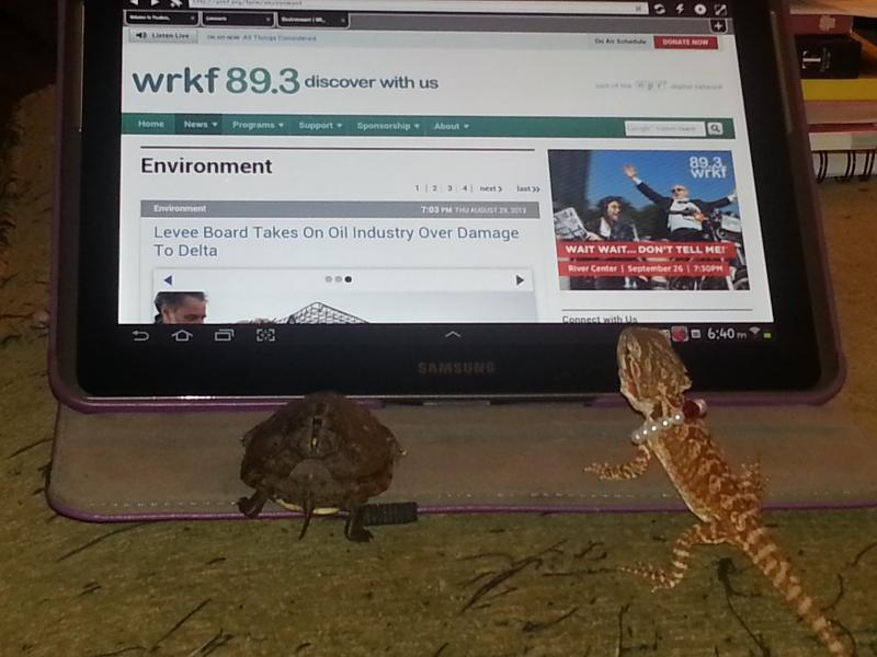 Lynn Farmer's pets, Sheldon the box turtle and Xena the bearded dragon, like to keep up with the environmental news by browsing WRKF's mobile app on Lynn's iPad.