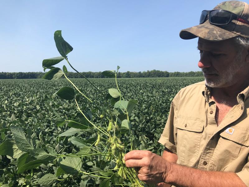 Charles Cannatella stands in a field of soybean plants at his farm in Melville, Louisiana.