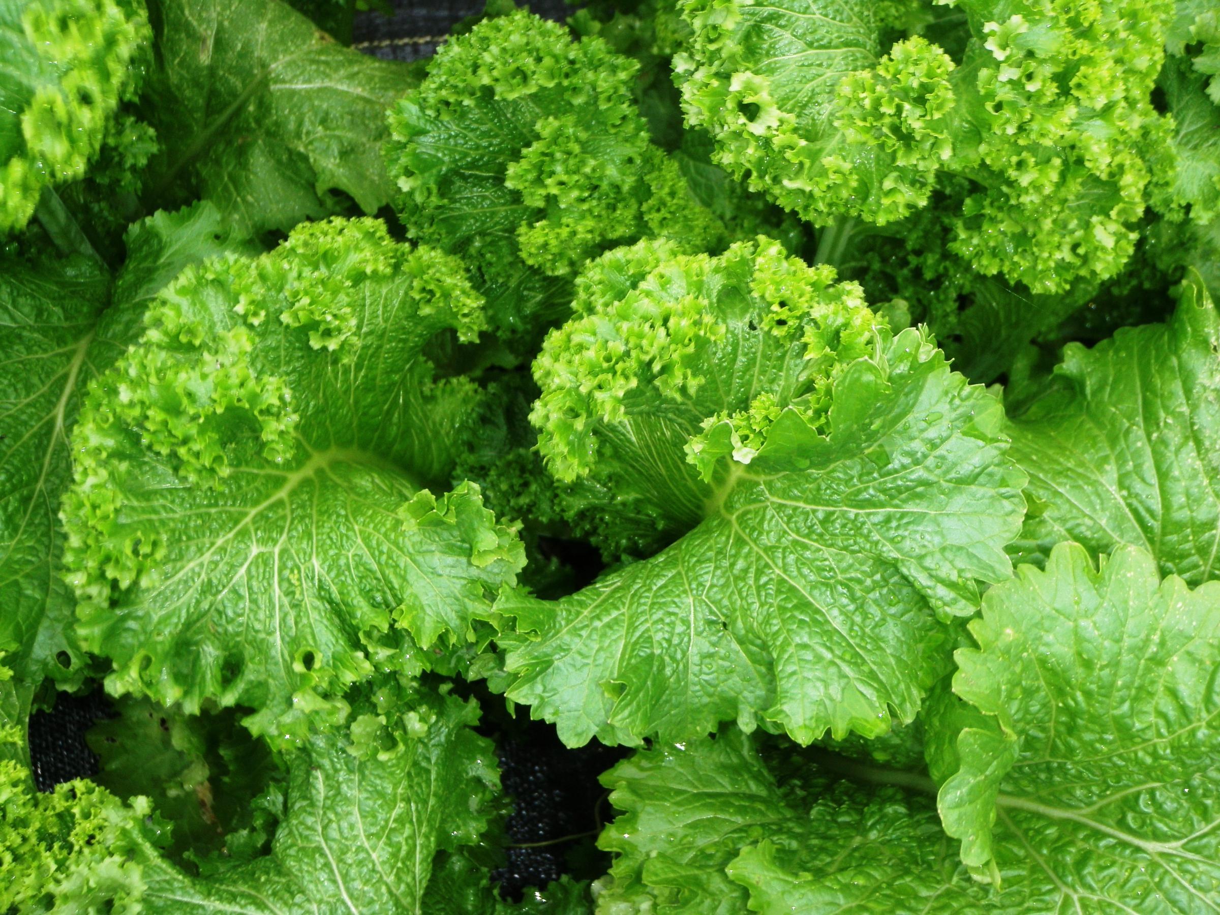 Start Planning For Your Cool Season Vegetables