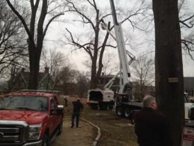 Crews prepare to cut down the old elm tree on the grounds of the John Brown House.