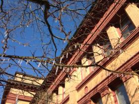 Icicles hanging from trees in downtown Providence.  It's April.