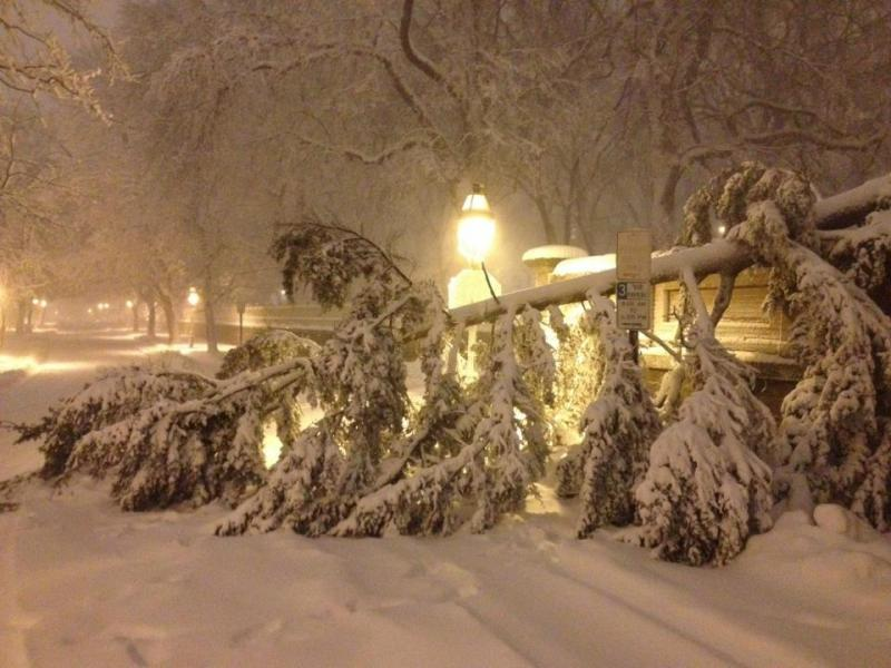 Tree down on College Hill