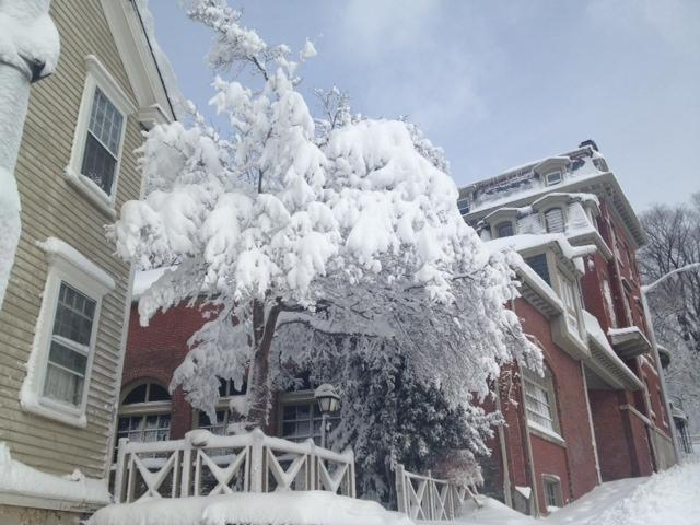 Snowy Tree on East Side