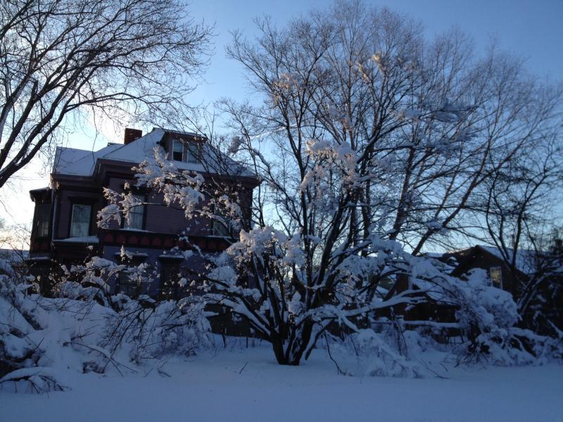 Snowy Tree in Providence