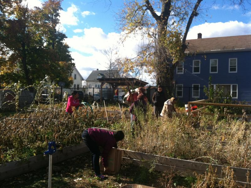 Refugees at the Brattle Community Garden