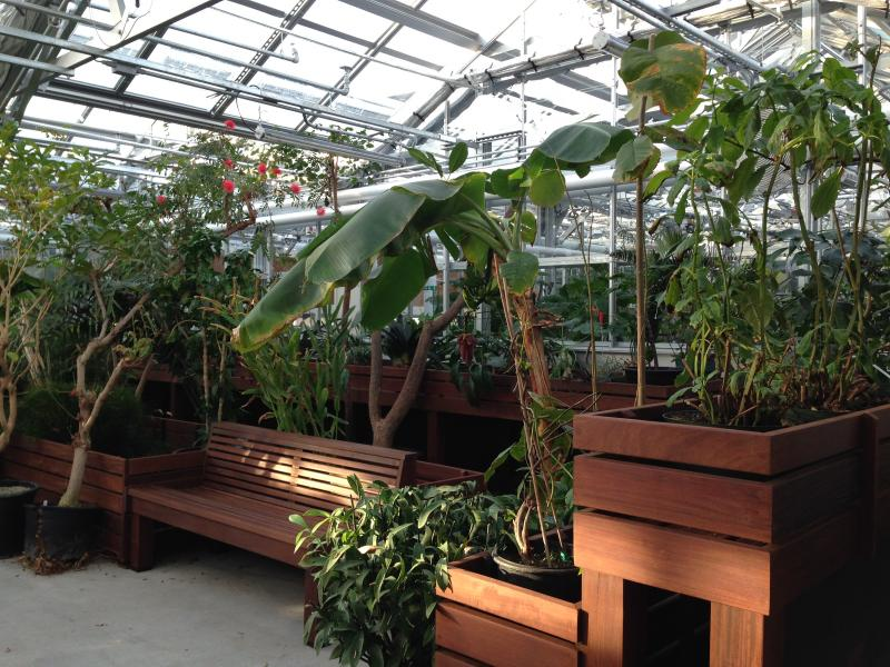 Just like in the old greenhouse, the conservatory, where people can take guided tours, will house a rich range of unusual, exotic plants found mostly in rainforests.