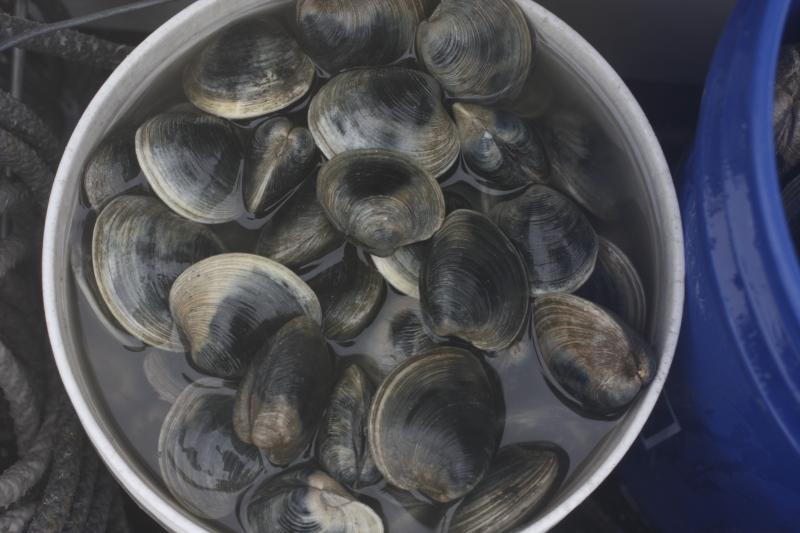Warwick resident and quahog fisherman Jody King said he's noticed the health of the bay improve over the past 20 years. He believes the quantity and quality of the clams he harvests has to do with better water quality.