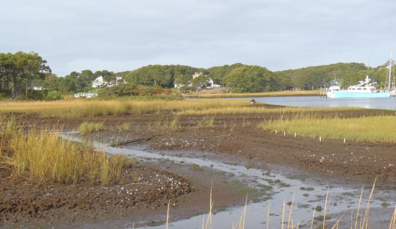 Recreational overfishing is disrupting the food webs in coastal saltmarshes in southern New England, leaving crabs free to eat as much cordgrass as they want. This is the reason behind the loss of saltmarshes, according to a research team at Brown.