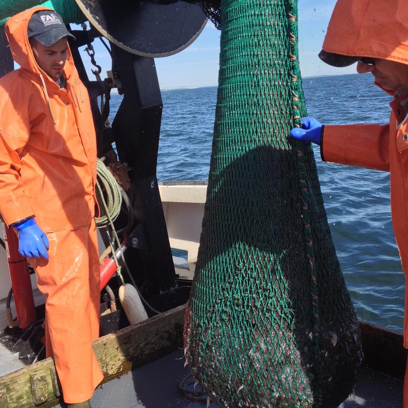 DEM marine biologist Scott Olszewski (right) brings up the trawl net with his colleague.