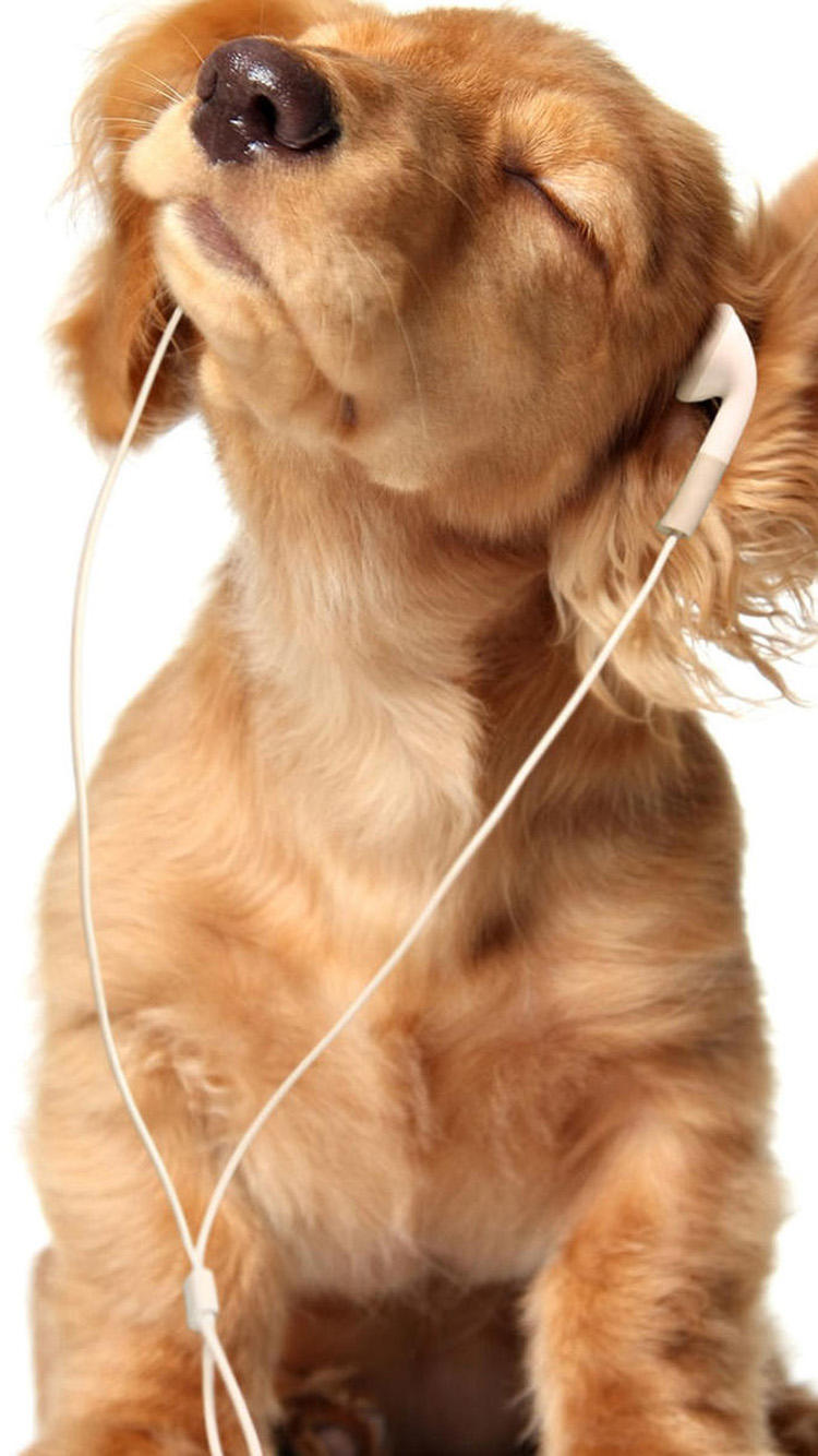 Cute dog listening to headphones
