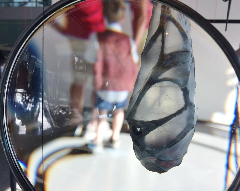 Peer through the magnifying lens for a close up of Dianne Reilly's work.