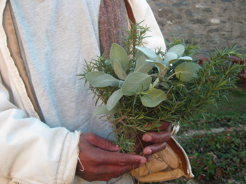 The turkey and stuffing inmates will save on Thanksgiving will be seasoned with herbs harvested by inmates participating in a therapy program called Garden Time.