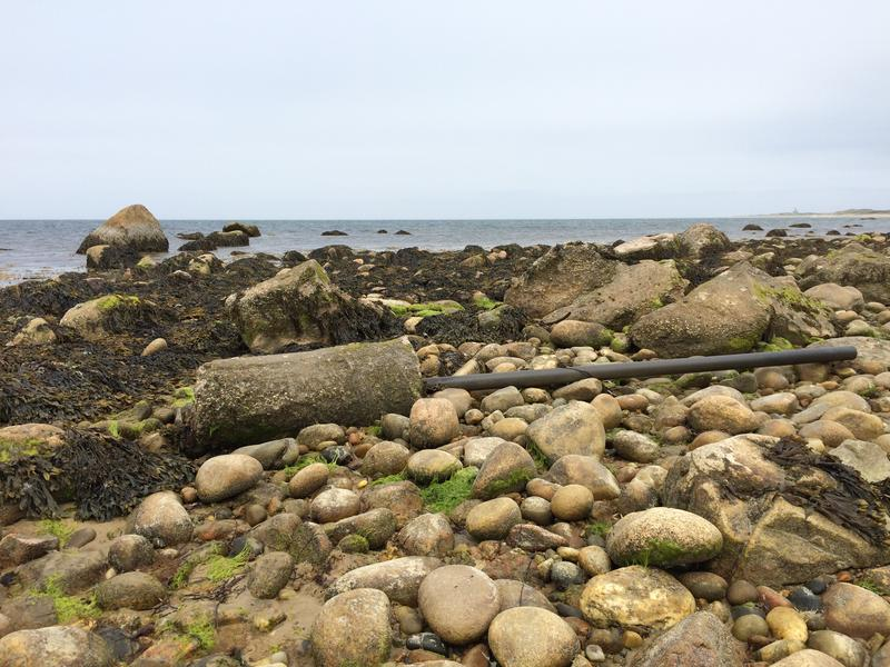 As recently as this spring, West Beach was littered with car parts and concrete, until this summer when the nonprofit Clean Bays removed at least 10 tons of this debris.