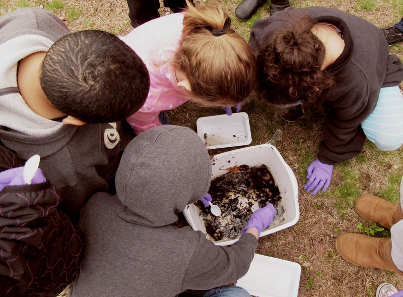 Under the overhauled federal K-12 education law, environmental education is eligible for education grants. The law  promotes environmental education as a way to enhance learning in science, technology, engineering and math.