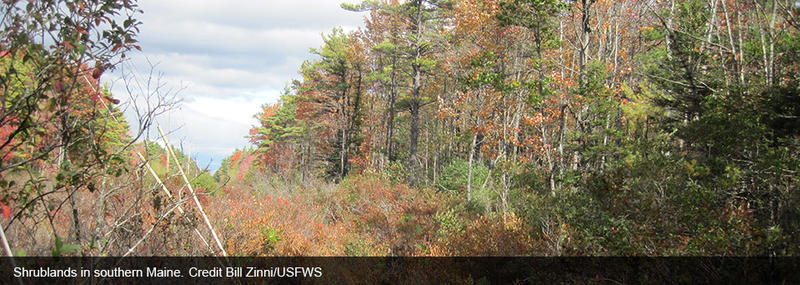 As shrubs and young trees have declined, so have many species of wildlife that depend on these habitats.