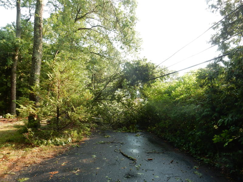 The Hurricane of 1938 took down more than 275 million trees throughout New England. With more trees and more buildings since that hurricane, state officials anticipate statewide wind damage with the expected climate threat of more severe weather events.