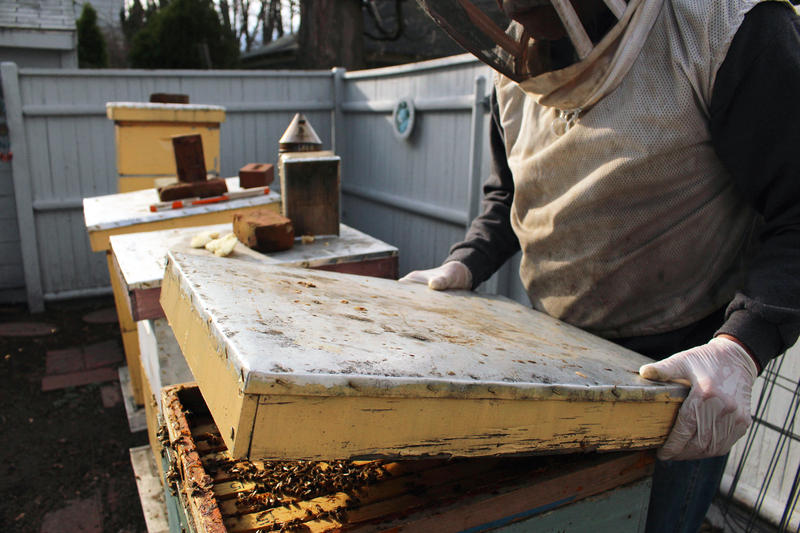 Earlier this spring during a warm spell, Ed Lafferty inspected his beehives.
