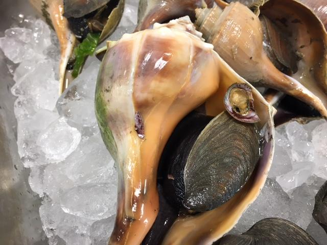 Raw whelk, up close. This species is actually a predator. Its favorite food? Quahogs.