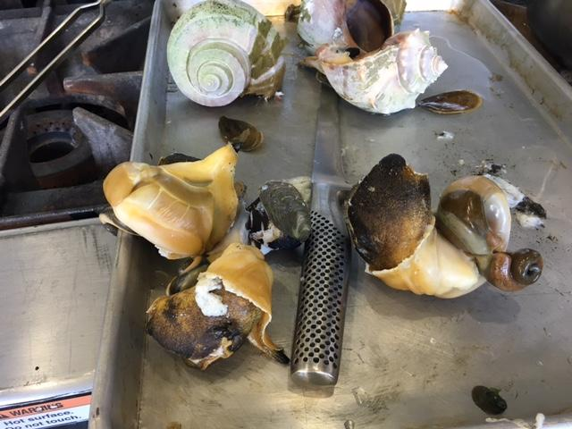 Cooked whelks, coaxed from their shells, look like snail.