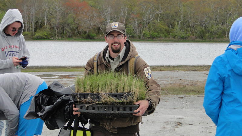 Ben Gaspar, scientist with U.S. Fish and Wildlife Service, holds salt marsh grass seedlings at a planting session at Narrow River Saturday, May 13, 2017.