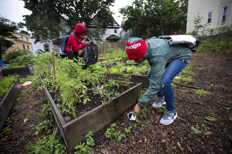 "In the ""Grow Or Die Garden"" on Ellington Street in Dorchester, Kenisha Allen of Mattapan, right, and Keema Green of Dorchester pick up trash that has blown around the raised garden beds."