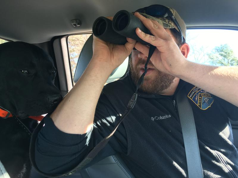 Josh Beuth, wildlife biologist for Rhode Island Department of Environmental Management Division of Fish and Wildlife, looks for wild turkeys through his binoculars accompanied by his dog, Whiskey.