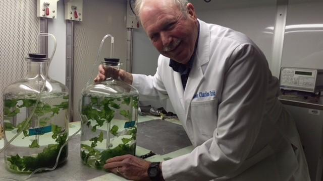 UConn Professor Charles Yarish poses with two jugs of seaweed at the Marine Biotechnology Lab at the UConn-Stamford campus. Yarish is at the forefront of seaweed R&D, helping to develop new technologies to convert the algae into fuel.