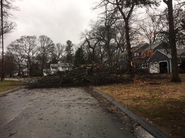 A fallen tree branch in East Greenwich