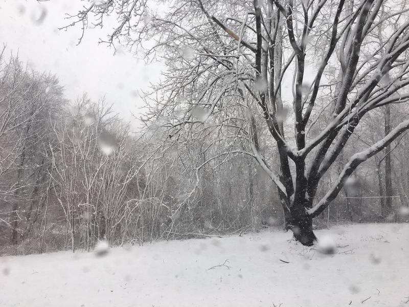 A snowy tree in Barrington as the storm began picking up steam on Tuesday morning.