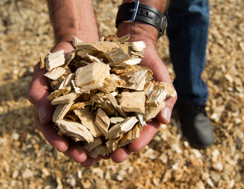 Wood chips like these are an example of biomass, organic materials that can be burned to prouduce electricity.