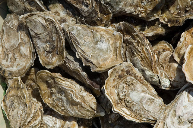 Oysters are a type of shellfish commercial gorwers could be farming at the Port of New Bedford this time next year.