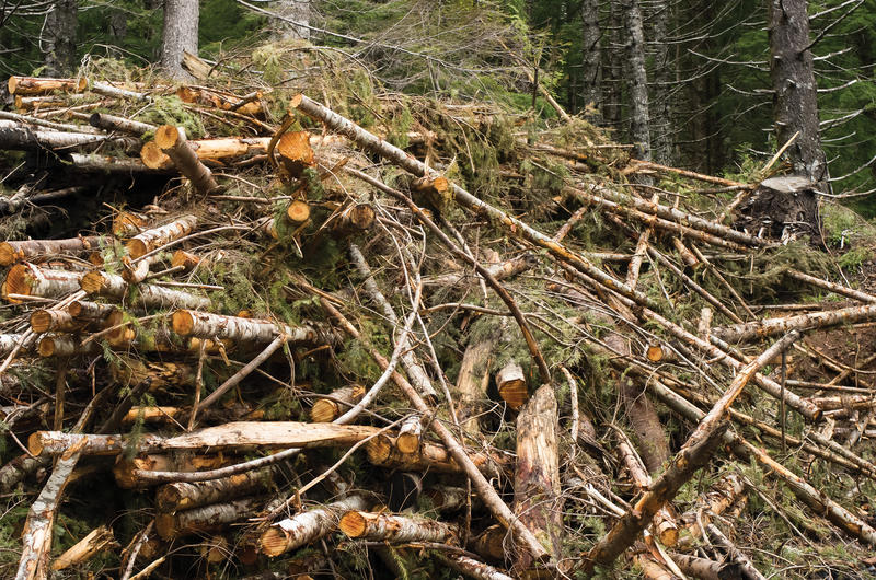 Wood that would otherwise end up in a landfill can be burned to generate electricity. However, environmentalists and renewable energy developers in Rhode Island have opposing opinions over its environmental impact.