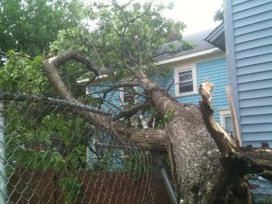 Thunderstorms knocked down trees, and left many without power in Providence.