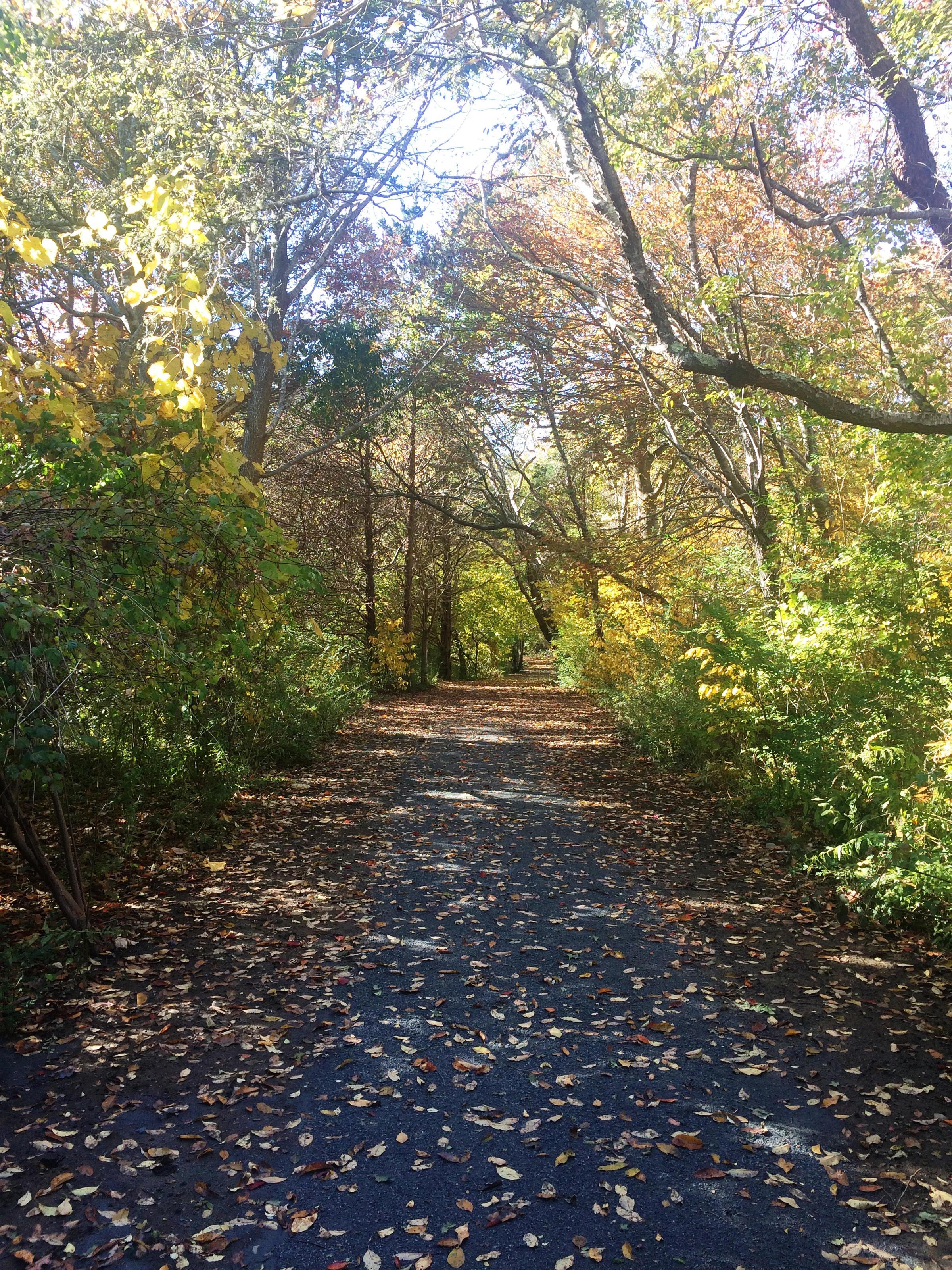 Norman Bird Sanctuary Unveils Accessible Trail   Rhode Island ...