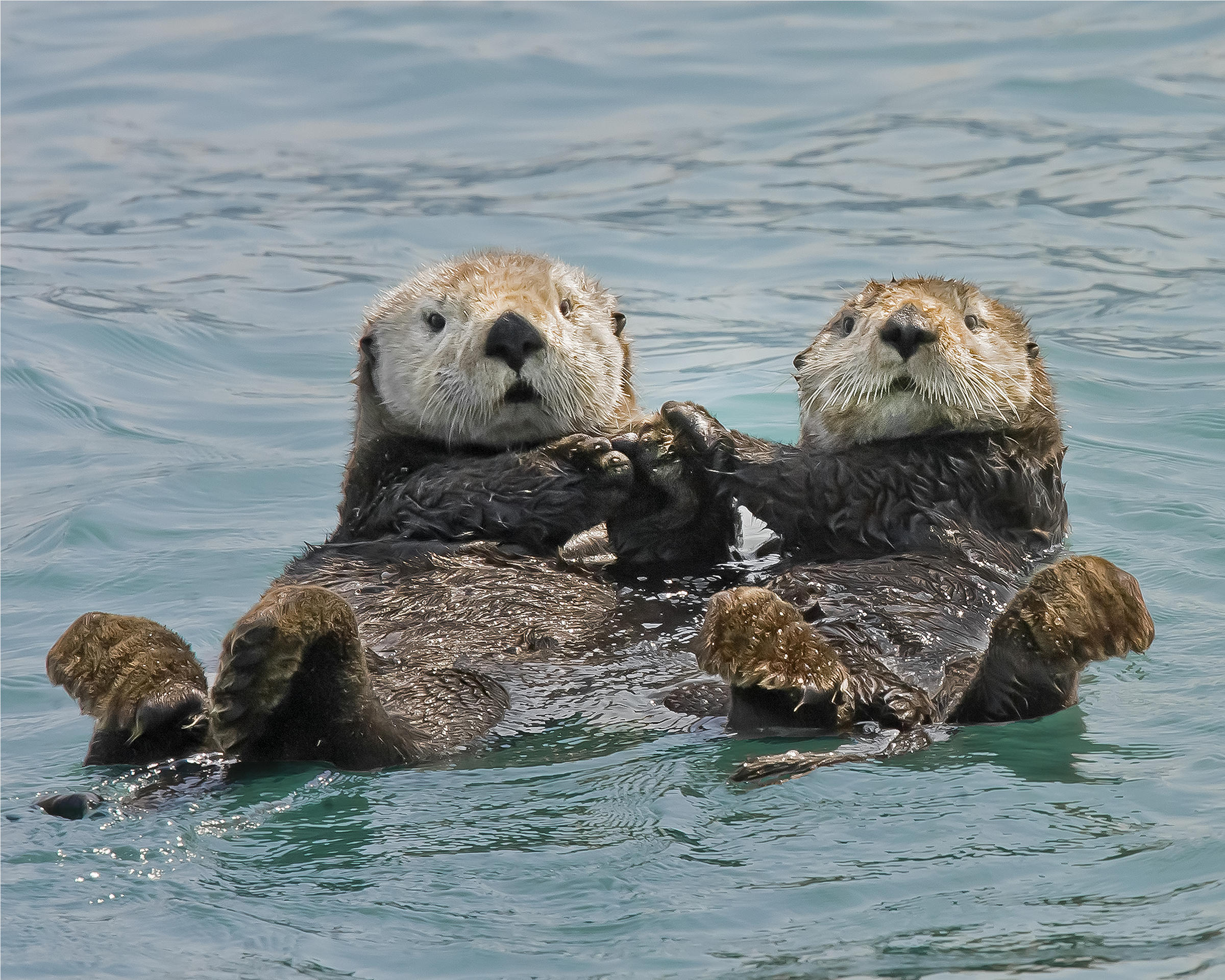 new book documents history of sea otters rhode island public radio