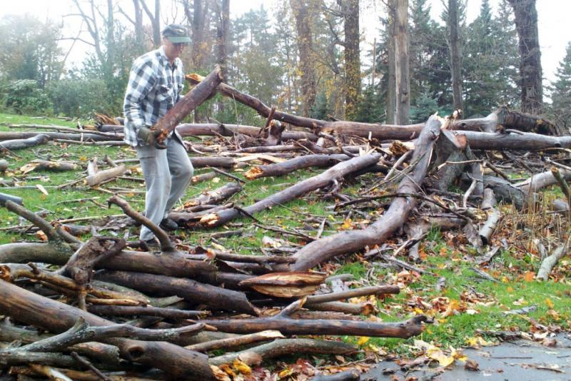 Lenny Hadcock of Fair Haven was collecting and piling the smaller branches from a large tree that fell in his yard from Sandy's winds.